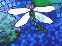 Close up of dragonfly detail